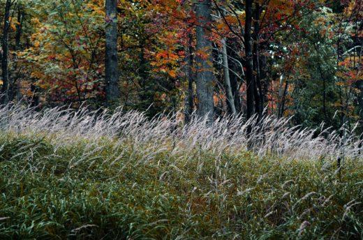 Myšlenky v podzimní krajině